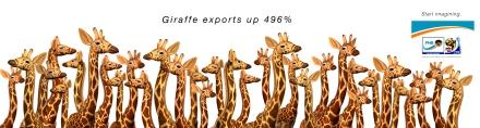 Giraffe Exports