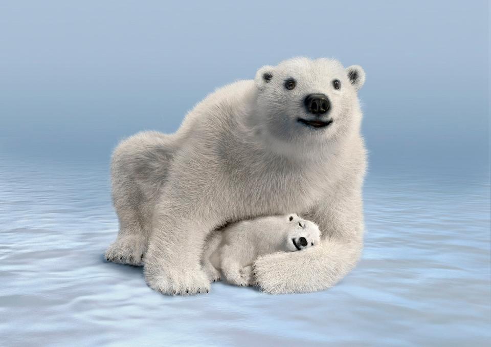 Mom & Cub